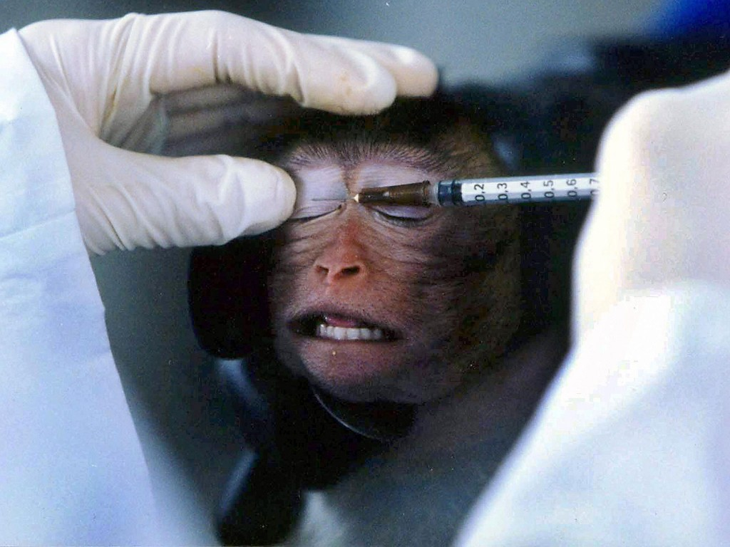 animal-testing-blogs-1024x768